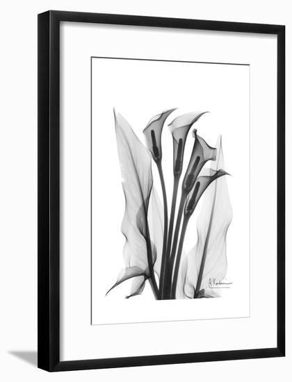Calla Lily Quad in Black and White-Albert Koetsier-Framed Art Print