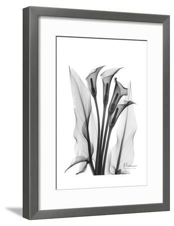 Calla Lily Quad in Black and White-Albert Koetsier-Framed Art Print