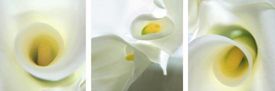 Calla Lily Triptych-Anna Miller-Photographic Print