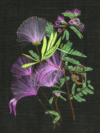 https://imgc.artprintimages.com/img/print/calliandra-surinamensis-ii_u-l-q19bznm0.jpg?p=0