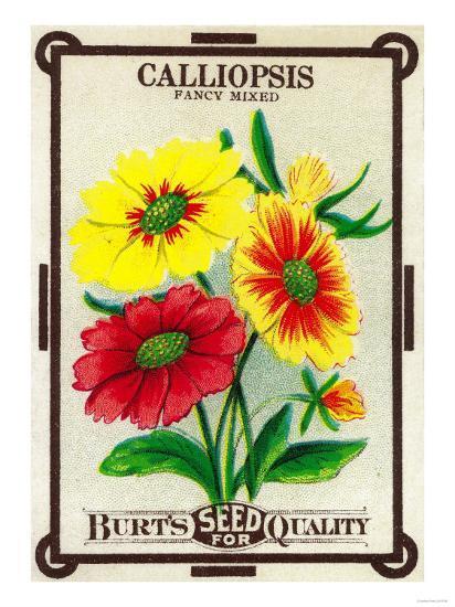 Calliopsis Seed Packet-Lantern Press-Art Print