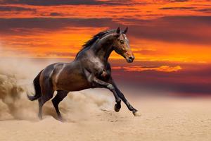 Beautiful Bay Horse Free Running by Callipso88