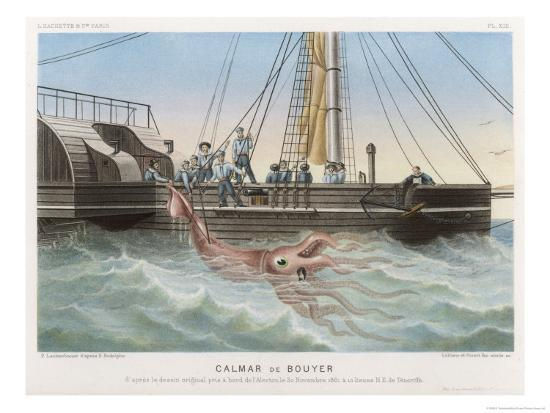 "Calmar de Bouyer Giant Squid Caught by the French Vessel ""Alecto"" off Tenerife Canary Islands-E. Rodolphe-Giclee Print"