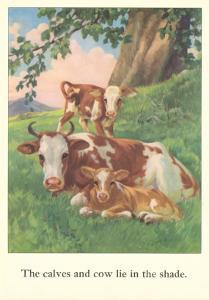 Calves and Cows Lie in Shade