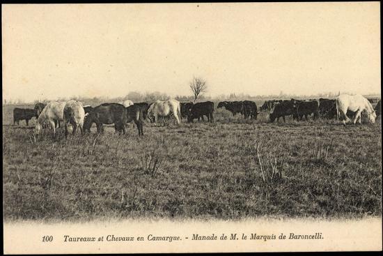 Camargue Vosges, Taureax Et Chevaux, Manade De M. Le Marquis De Baroncelli  Giclee Print by   Art.com 50e0a9ac576