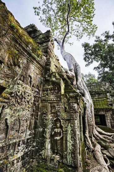 Cambodia, Ta Prohm, Siem Reap Province. the Ruins of the Buddhist Temple of Ta Prohm-Nigel Pavitt-Photographic Print