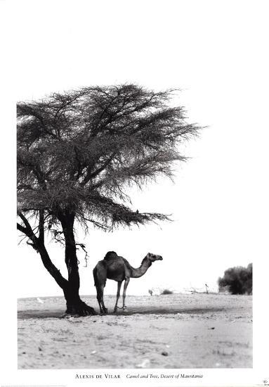 Camel and Tree, Desert of Mauritania-Alexis De Vilar-Art Print