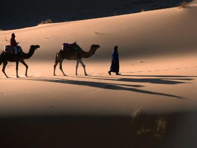 Camel Caravan Crossing Dunes, Erg Chebbi Desert, Morocco-John Elk III-Photographic Print