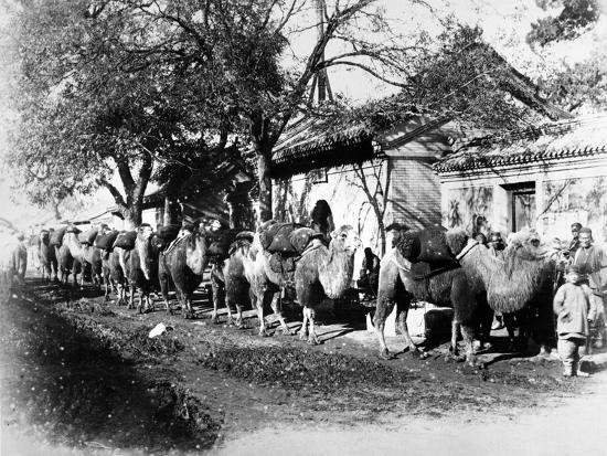 Camel Caravan on the Outskirts of Peking, C.1875--Photographic Print