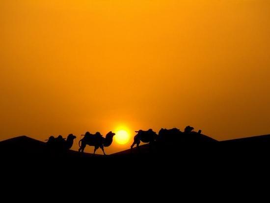 Camel Caravan Silhouette at Dawn, Silk Road, China-Keren Su-Photographic Print