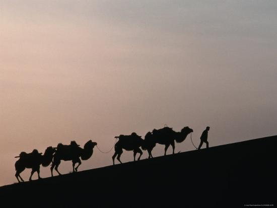 Camel Caravan Silhouetted at Dawn on the Silk Road, Dunhuang, China-Keren Su-Photographic Print