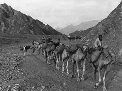 Camel Caravan--Photographic Print