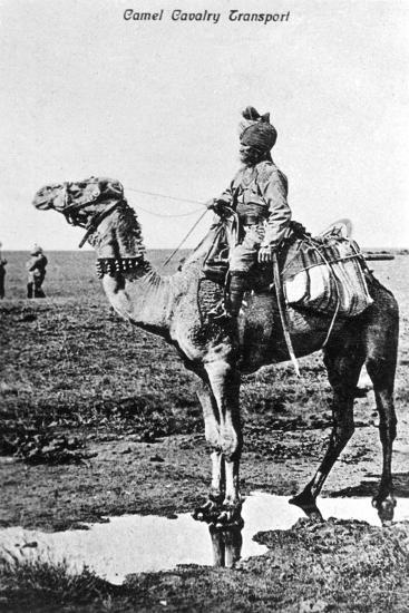 Camel Cavalry Transport, India, 20th Century--Giclee Print