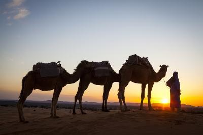 Camel Driver, Sahara Desert, Merzouga, Morocco, North Africa, Africa-Doug Pearson-Photographic Print
