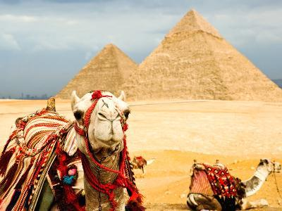 Camel in Egypt- nutsiam-Photographic Print