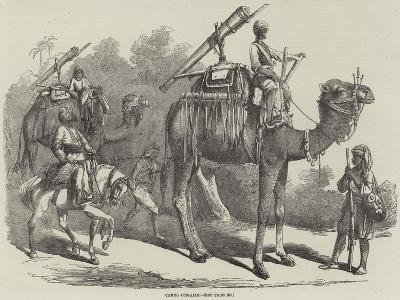 Camel Jingalls--Giclee Print