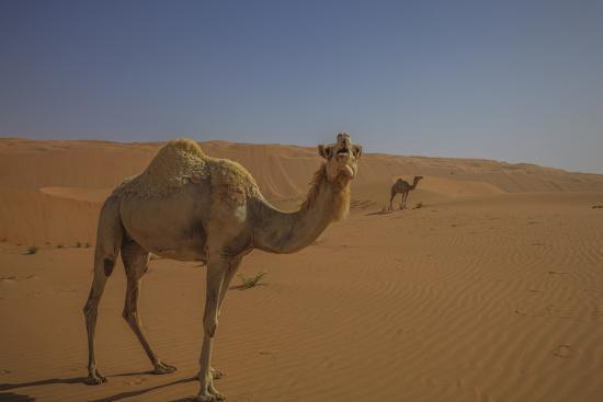 Camel Looking At Camera-Matias Jason-Photographic Print