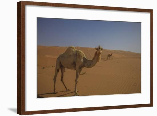 Camel Looking At Camera-Matias Jason-Framed Photographic Print
