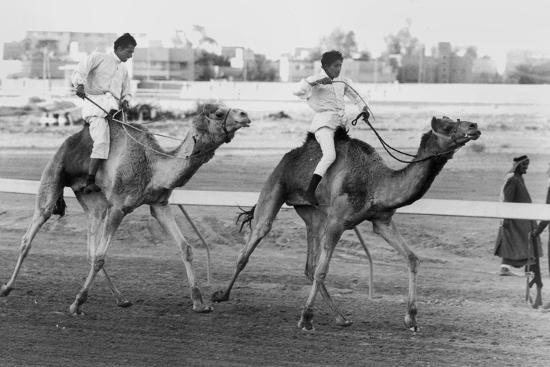 Camel Race in Saudi Arabia in Honour of Queen Elizabeth Ii's Visit to To the Middle East, 1979--Photo