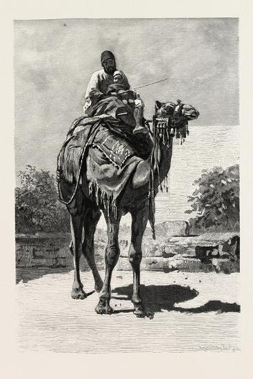 Camel Rider, Egypt, 1879--Giclee Print