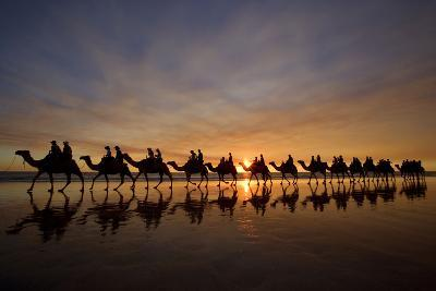 Camel Safari Famous Camel Safari on Broom's Cable--Photographic Print