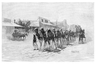 Camel Team, Wilcannia, New South Wales, Australia, 1886--Giclee Print