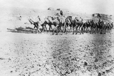 Camel Train, Mosul, Mesopotamia, 1918--Giclee Print