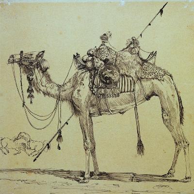 Camel-Rodolphe Bresdin-Giclee Print