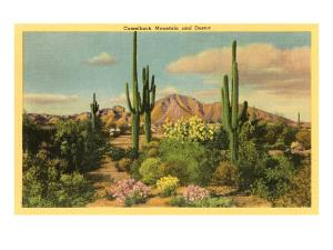 Camelback Mountain, Saguaros, Arizona