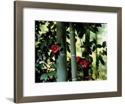 Camellia and Bamboo