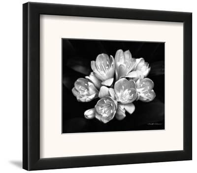 Camellia Bloom-Harold Silverman-Framed Art Print