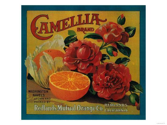 Camellia Orange Label - Redlands, CA-Lantern Press-Art Print