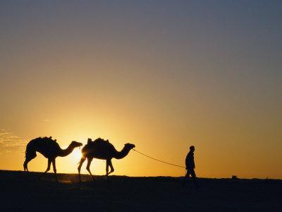 https://imgc.artprintimages.com/img/print/camels-and-guide-zaafrane-tunisia-north-africa_u-l-p2gihl0.jpg?p=0