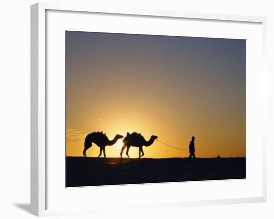 Camels and Guide, Zaafrane, Tunisia, North Africa-David Poole-Framed Photographic Print