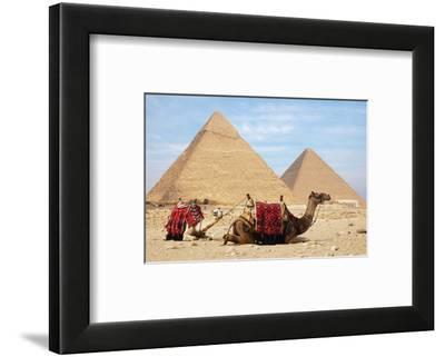 Camels and Pyramids Giza Egypt--Framed Art Print