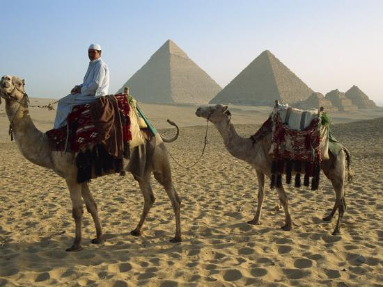 Camels and Rider at the Giza Pyramids, UNESCO World Heritage Site, Giza, Cairo, Egypt-Dominic Harcourt-webster-Photographic Print