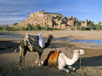 Camels by Riverbank with Kasbah Ait Benhaddou, Unesco World Heritage Site, in Background, Morocco-Lee Frost-Photographic Print