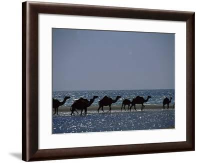 Camels Crossing Coastal Lagoon and Arabian Sea, Near Salalah, Dhofar Region, Oman, Middle East-Patrick Dieudonne-Framed Photographic Print