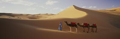 Camels in Desert Morocco Africa--Photographic Print