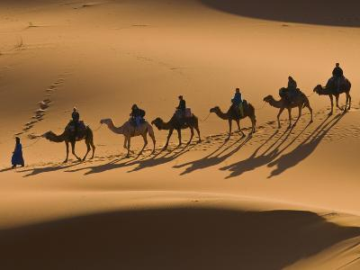 Camels in the Dunes, Merzouga, Morocco, North Africa, Africa-Michael Runkel-Photographic Print