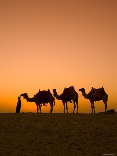 Camels Near the Pyramids at Giza, Cairo, Egypt-Doug Pearson-Photographic Print