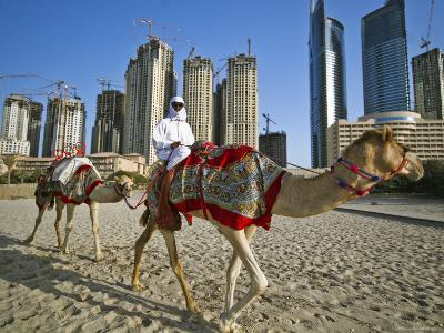 Camels on Beach with High-Rises in Background-Merten Snijders-Photographic Print