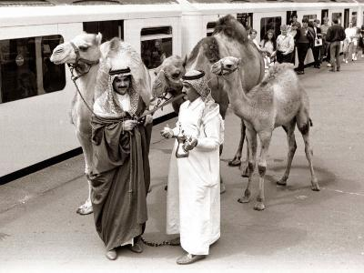 Camels with Arab Handlers at Olympia Station, August 1986--Photographic Print