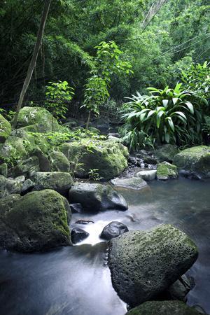 Nuuanu Stream Vertical