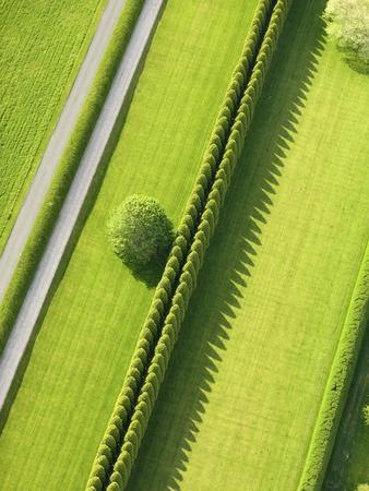 Hedge in The Hamptons