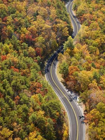 Road through Autumn forest by Cameron Davidson