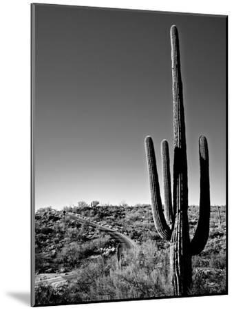 Saguaro Cactus by Cameron Davidson