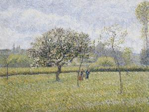 Apple Tree in Flower at Eragny by Camille Pissarro