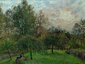 Apple Trees and Poplars in a Sunset, 1901 by Camille Pissarro