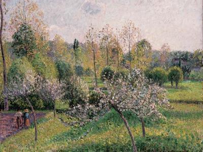 Apple Trees in Blossom, Eragny, 1895